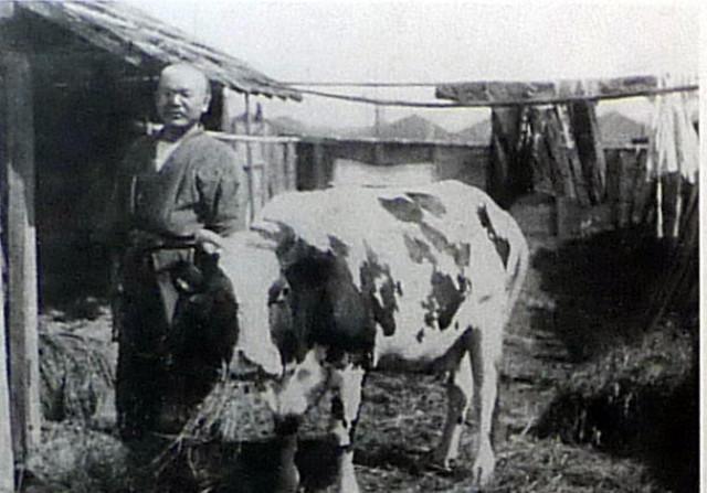 Sachio con una de sus vacas