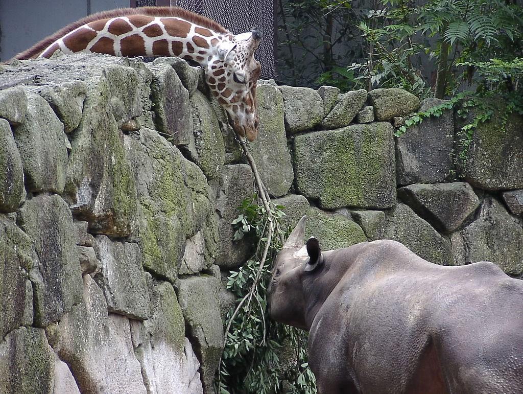 Jirafa y rinoceronte