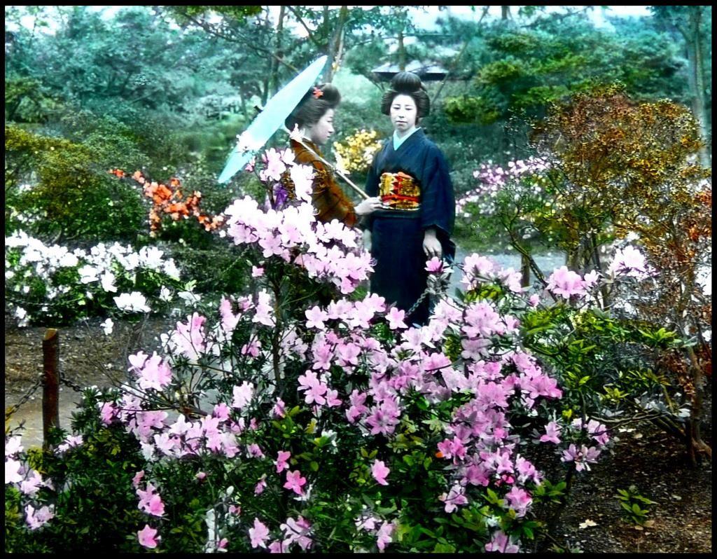 Geisha entre las azaleas del  parque Hibiya, cerca del Hotel Imperial, en Tokio, T.Enami, ca. 1925-28.