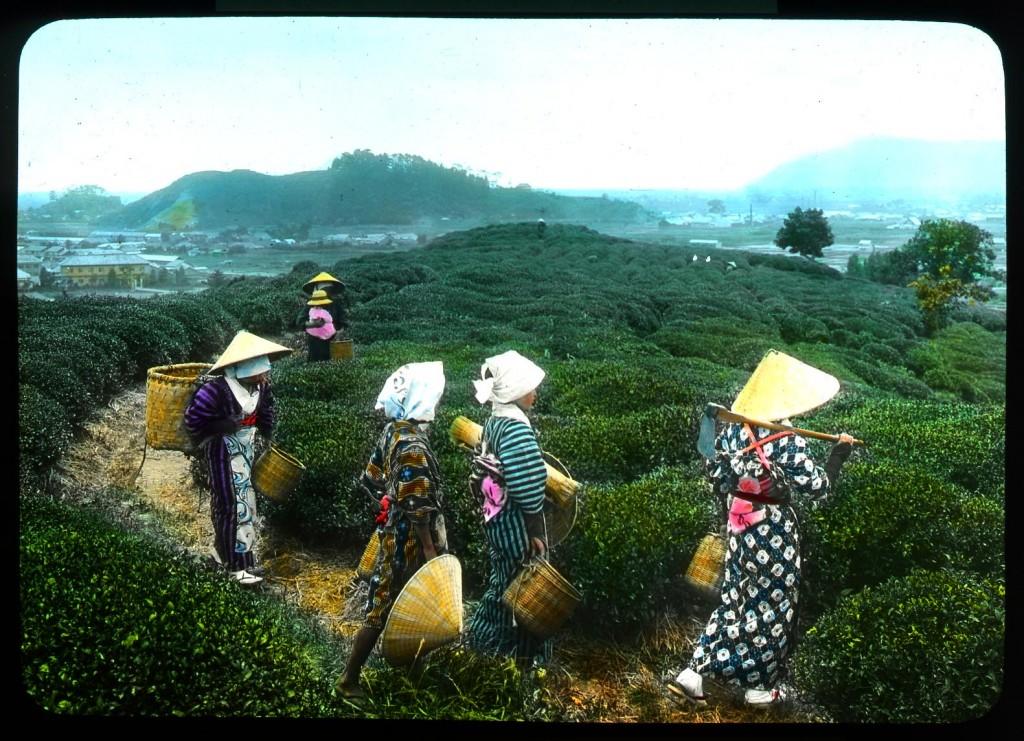 Jóvenes de regreso a casa tras la jornada en los campos de té, Enami Studio.