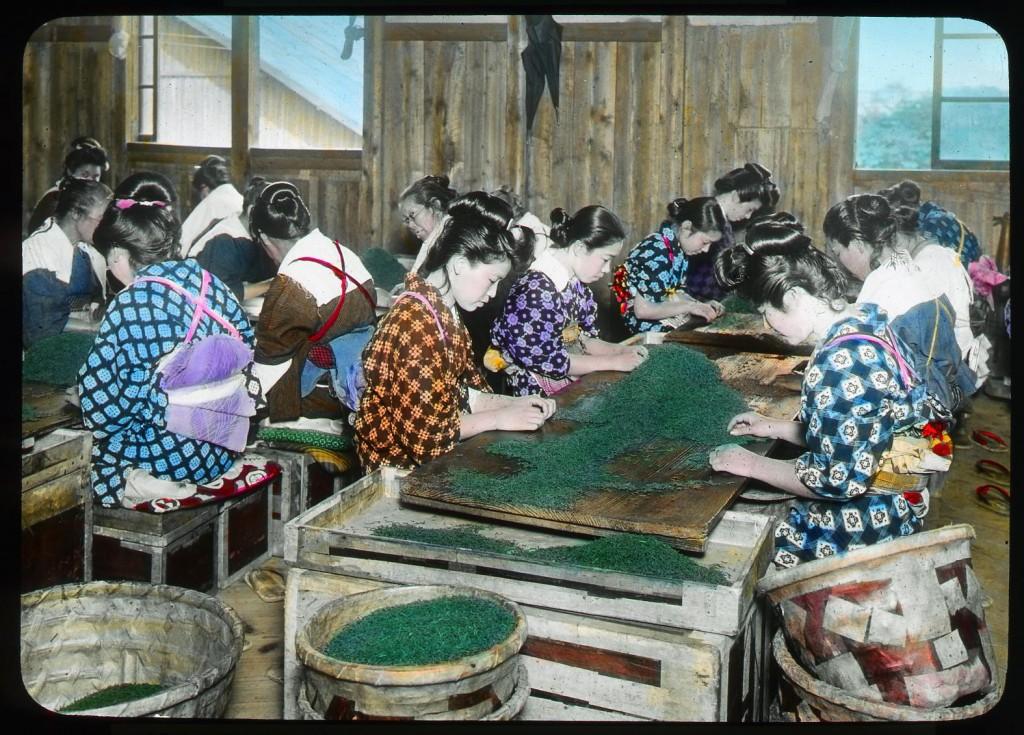 Jóvenes seleccionando palitos y hojas de té desenrolladas, Enami Studio, n.º 605.