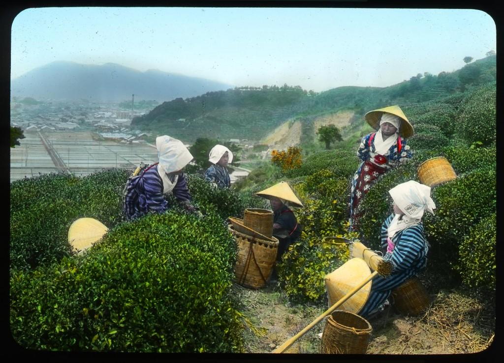 Jóvenes tomándose un descanso en una plantación de té, Enami Studio, n.º 586.