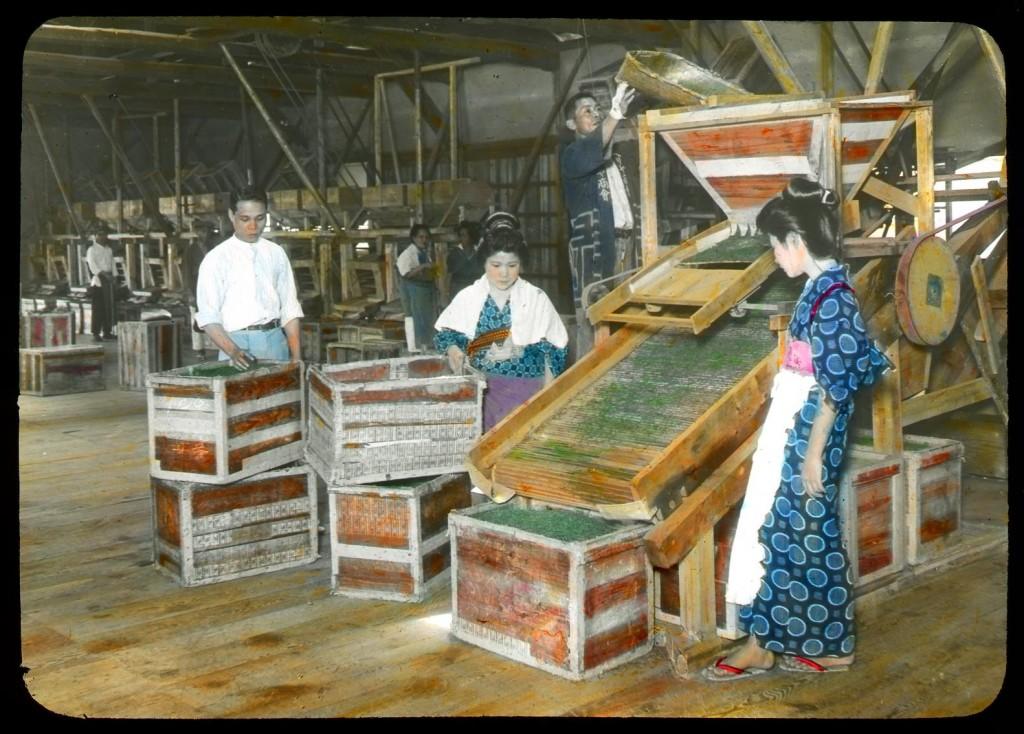 Refinado mecánico del té verde, Enami Studio, n.º 599.