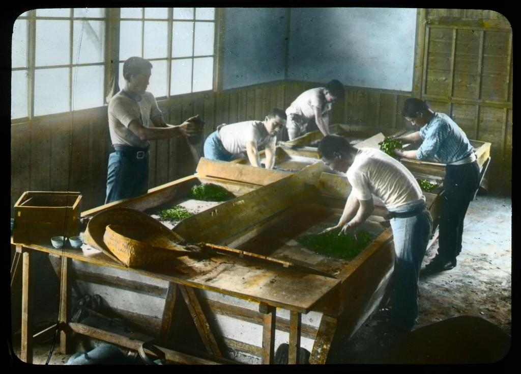 Enrollado y secado de hojas de té, Enami Studio, n.º 590.